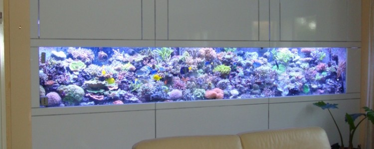 fabricant achat vente d aquarium sur mesure center aquarium